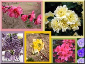 FlowersRC