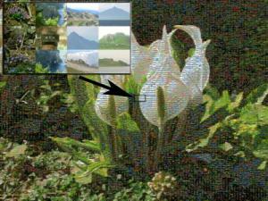 May03_Funagata_023_Lysichiton_camtschatcense_Annotated