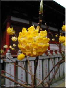 Mar18_Mitsumata02RC.jpg