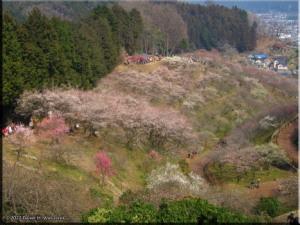 Mar04_HinatawadaPlum22RC.jpg