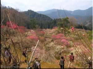 Mar04_HinatawadaPlum36RC.jpg