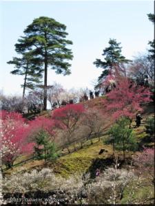Mar15_Hinatawada_YoshinoBaigo034RC.jpg