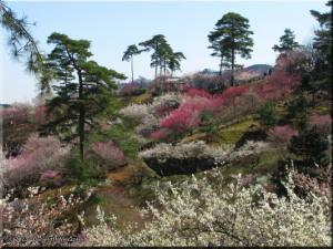 Mar15_Hinatawada_YoshinoBaigo038RC.jpg