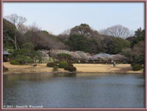 Mar08_099_ShinjukuGyoenPark_Pond_PlumBlossomsRC