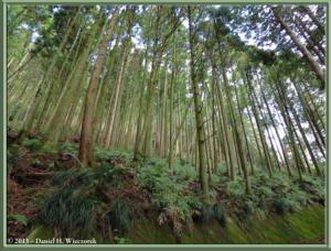 Mar15_10_MtYagura_MtKintoki_ForestRC