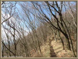 Mar15_16_MtYagura_MtKintoki_TrailRC