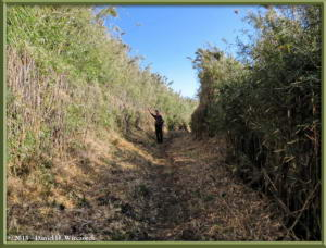Mar16_007_ClimbingMtMyojingatake_Trail_KazuyaRC