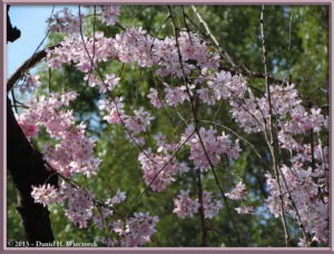 Mar20_02_ICU_CherryRC