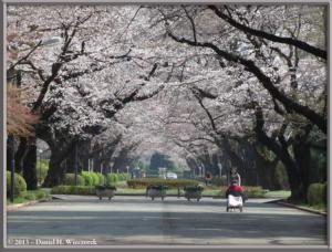 Mar20_06_ICU_CherryRC