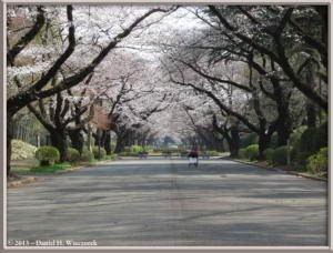 Mar20_07_ICU_CherryRC