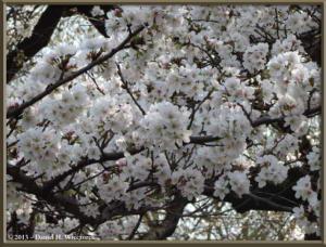 Mar20_13_ICU_CherryRC
