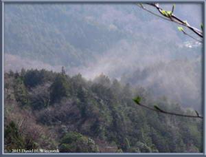 Mar23_013_MinamiTakao_PollenBlowingRC
