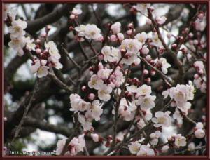 March3rd_JindaiBG011_UsuiroChirimenRC