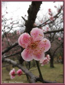 March3rd_JindaiBG036_MoriNoSekiRC