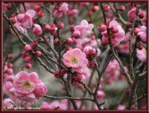March3rd_JindaiBG041_SekaiNoZuRC