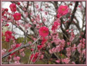 March3rd_JindaiBG046_KagoshimaBeniRC