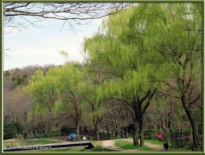 March27_41_NogawaPk_SpringColorsRC