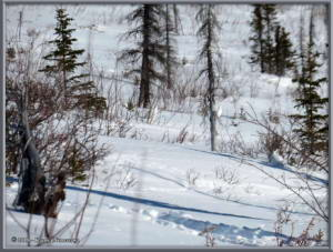 March26th_128_EagleSummit_PtarmiganRC