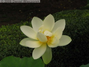 Jul3_JindaiBG039_LotusRC.jpg