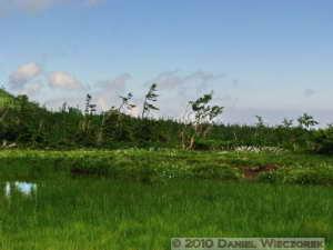 Jul23_062ACDSH_TsugaikeArea_Scenery_MarshRC