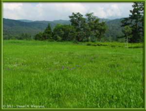 July15_041_OzeNP_Cottongrass_IrisRC