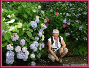 July1st_TakahataFudou016_Hydrangea_DanielRC
