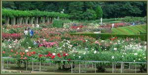 Jul08_41_42_Panorama_JindaiBG_RoseGardenRC