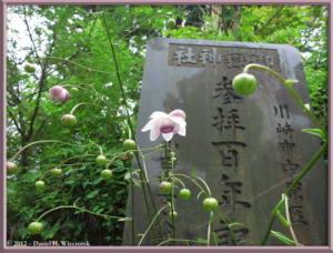 Jul29_75_MtMitake_Rengeshouma_Anemonopsis_macrophyllaRC