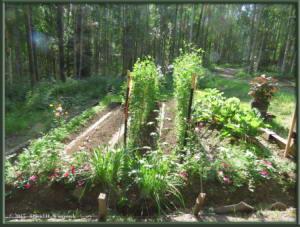 July30_1_Garden