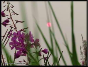 July7_23_GettingersField_SmokySunRC