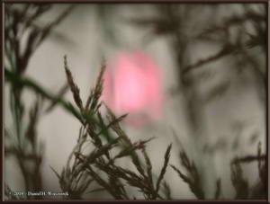 July7_36_GettingersField_SmokySunRC