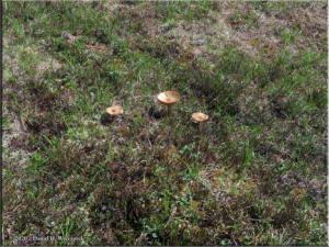 Jul3_100_Twelvemile_MushroomsRC