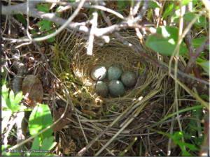 July3rd_092_TwelvemileSummit_BirdsNestRC