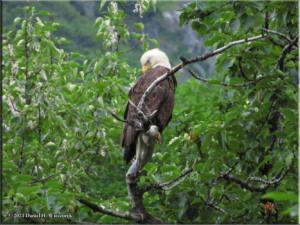 Jul15_003_EagleTree_ValdezGlacierCGRC