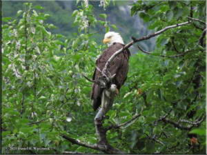 Jul15_004_EagleTree_ValdezGlacierCGRC