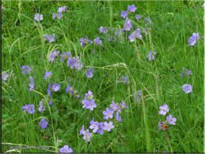 Jul15_197_ThompsonPass_FlowersRC