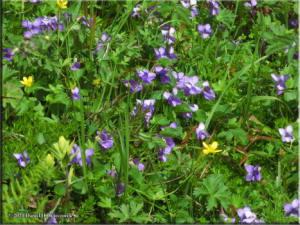 Jul15_261_ThompsonPass_FlowersRC