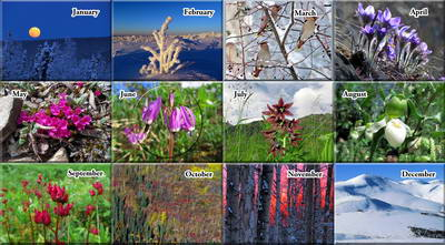 2021 Alaska Nature Photos Calendar Book - The Photos