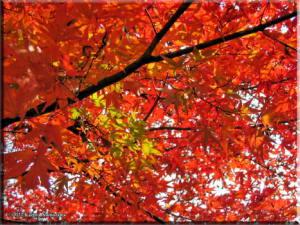 Mitake_FallColor_Nov19_47RC.jpg