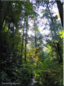 Nov05_TakaoSanSun_TreesRC.jpg