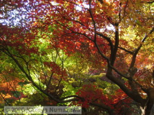 JindaiBGFallColor10RC.jpg