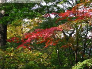 Nov18_MtTakaoSummitFallColor01RC.jpg
