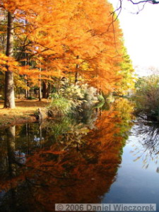 Nov25_JindaiBotGarden_Taxiodium_ReflectionRAW04RC.jpg