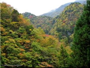 03Nov_KawanoriTrailFallColor43aRC.jpg