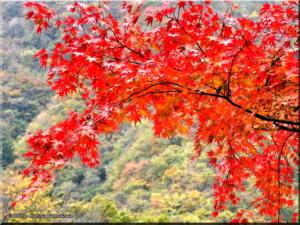 17Nov_Okutama_MukashiMichi_FallColors107eRC.jpg