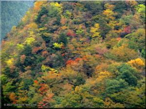 Nov03_KawanoriTrail_FallColor12aRC.jpg