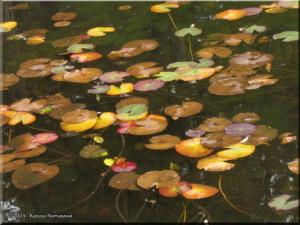 Nov07_JindaiBG44_Pond_FallColorRC.jpg