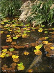Nov07_JindaiBG45_Pond_FallColorRC.jpg