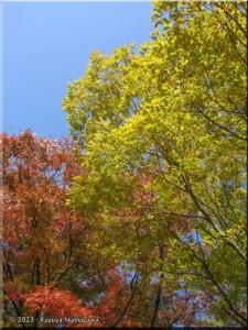 Nov14_ICU_FallColors04RC.jpg