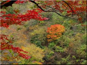 Nov17_OkutamaOldRoad_FallColor72aRC.jpg